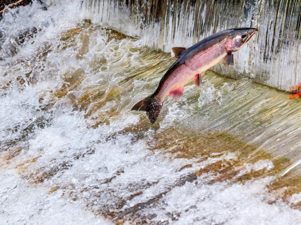California State History Nimbus Fish Hatchery,