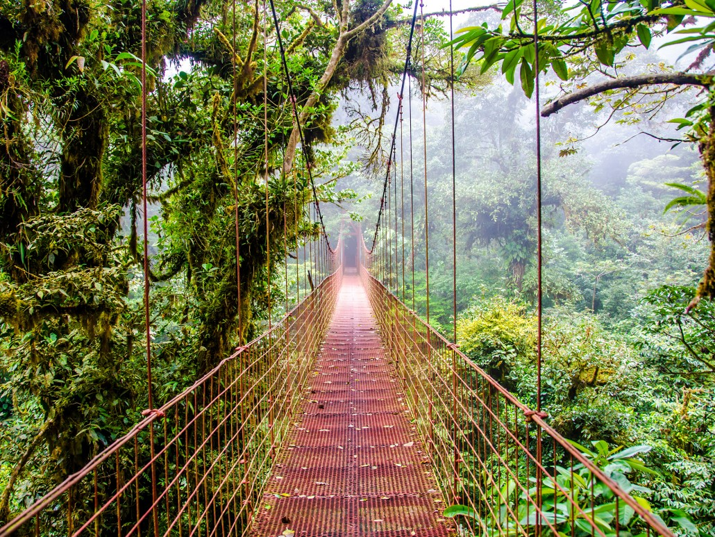 Monteverde Cloud Forest - Monte Verde, Costa Rica
