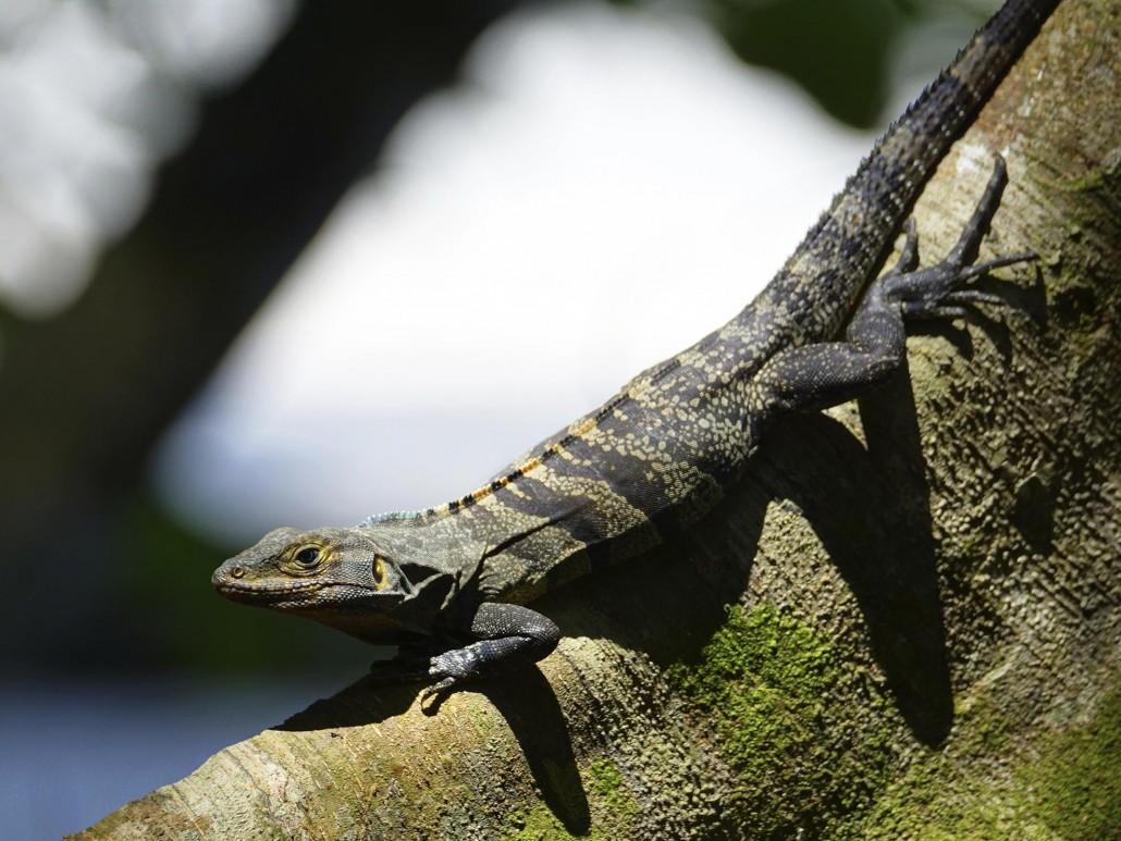Costa Rica: The Grand Tour