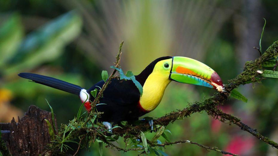 Toucan Costa Rica Trip