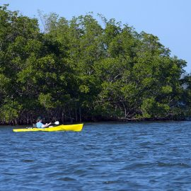 Splash into Science Garden Cove Kayak Tour - Key Largo, Florida
