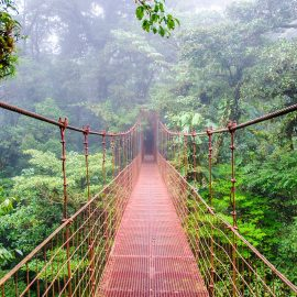 Monteverde cloud Forest - Puntarenas, Costa Rica