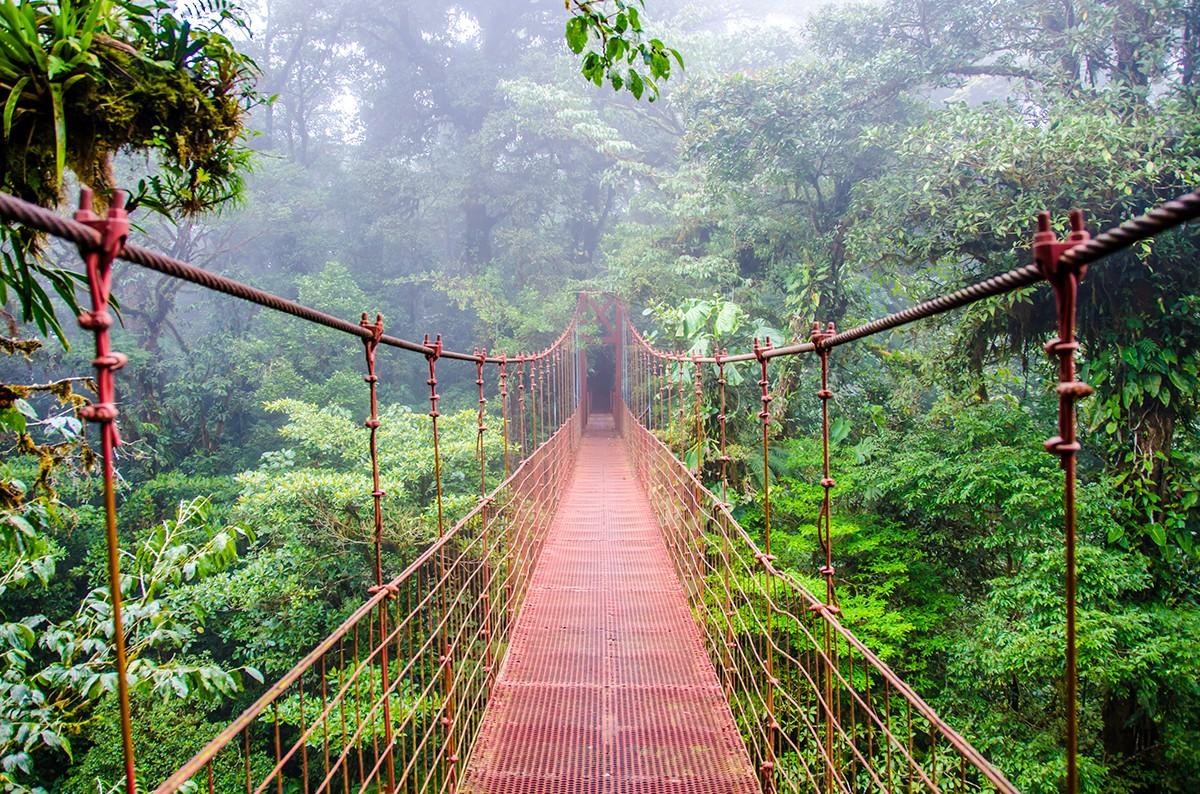 Monteverde cloud Forest - Puntarenas, Costa Rica