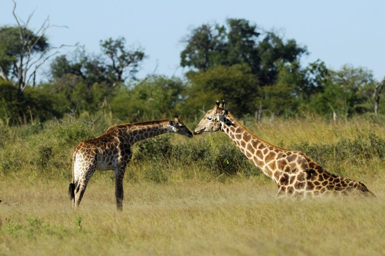 Malawi Leadership program - Giraffes
