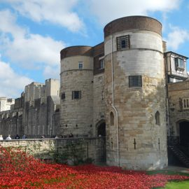 Poppies at London Tower