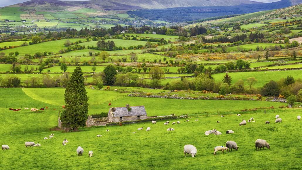 Ireland Programs