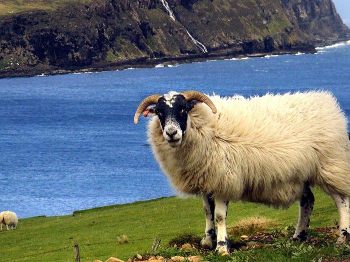 Scotland Coastline