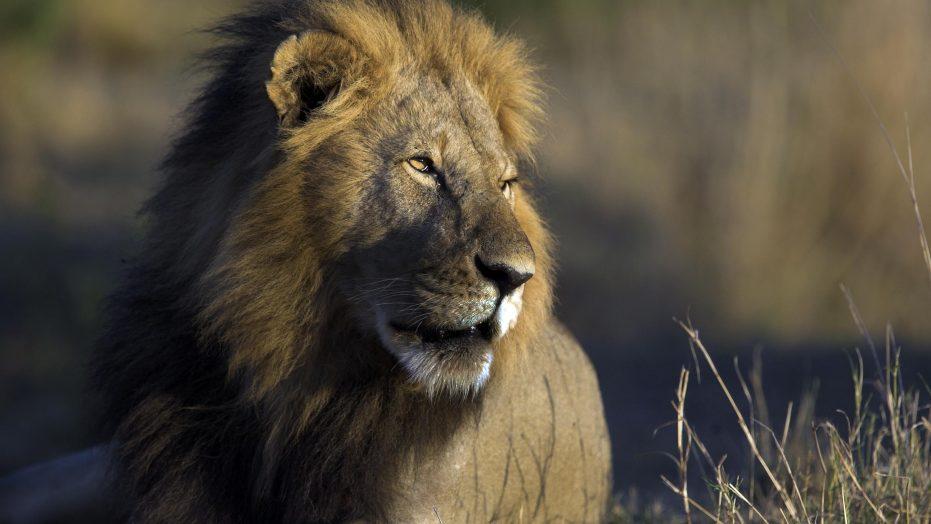 Service and Safari in Kenya