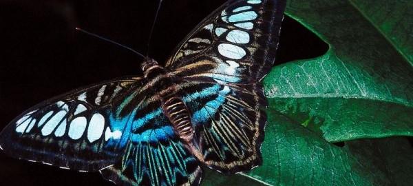 Butterfly Taste Buds