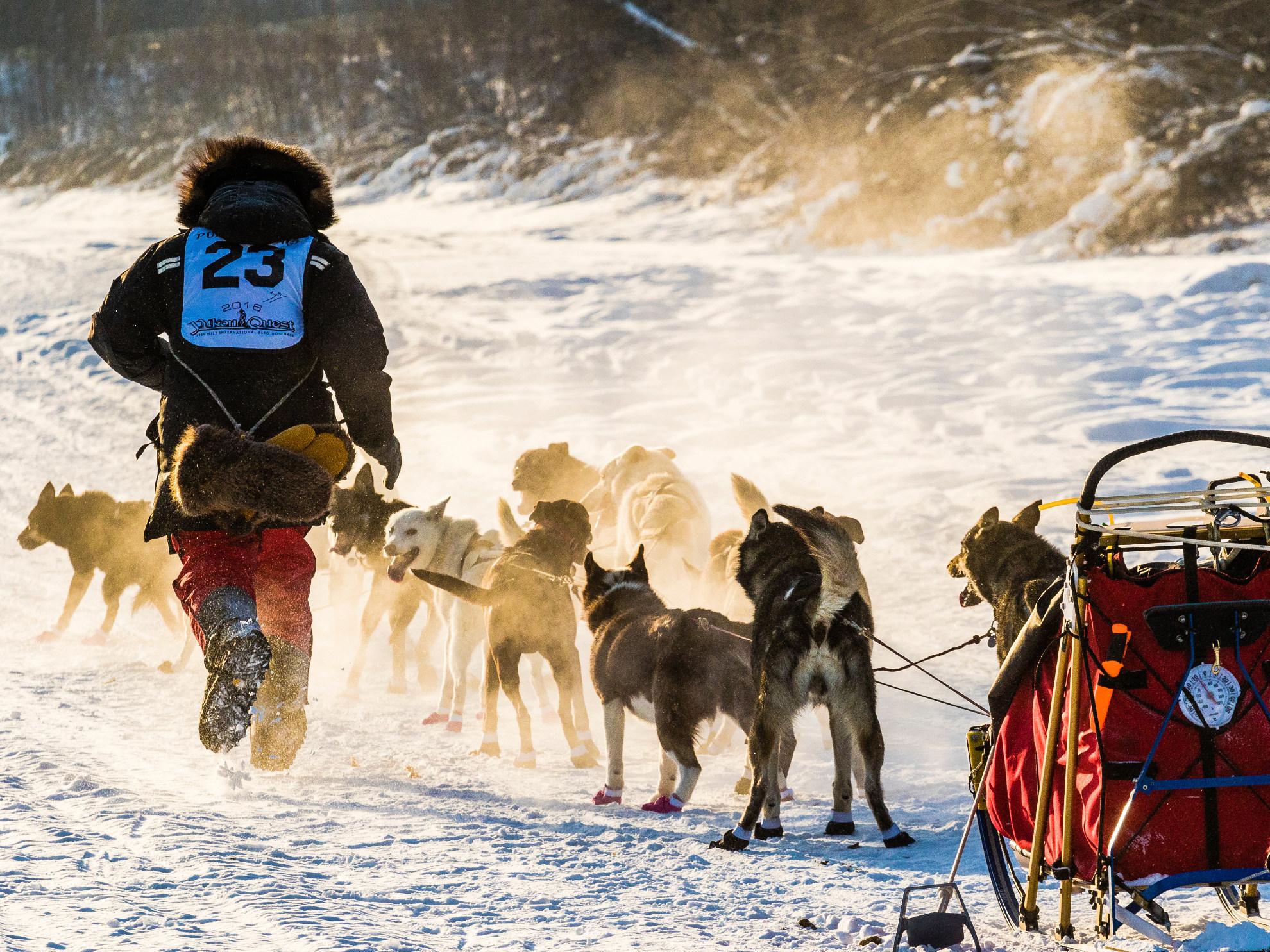 Iditarod Dog Sled Race Alaska