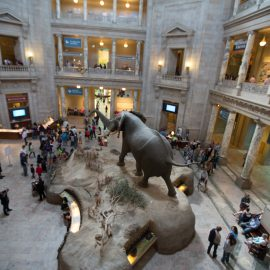 American Museum of Natural History - Smithsonian Washington, D.C.
