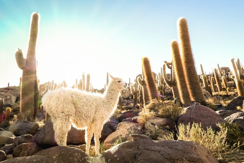 Service-learning tours in Bolivia – Bolivia service-learning tour