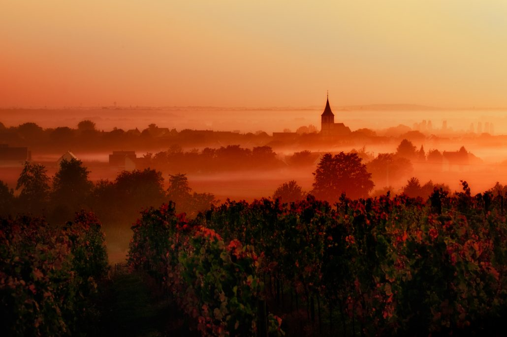 sunset over the vineyards in the loire valley