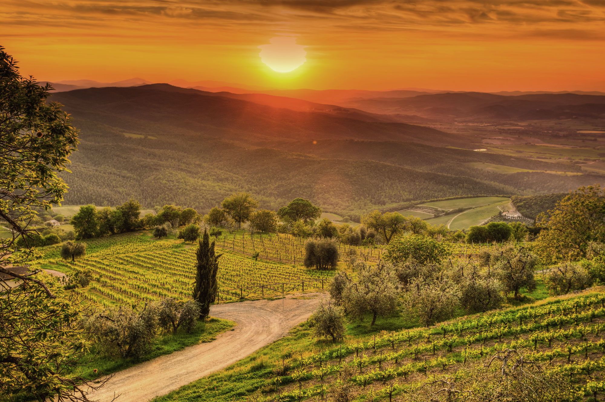 Tuscany, Vineyards