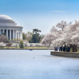 Jefferson Memorial in Spring with Cherry Blossoms