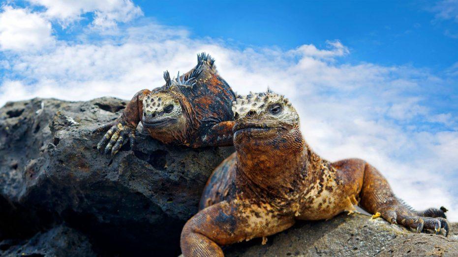 Galapagos Student Trip