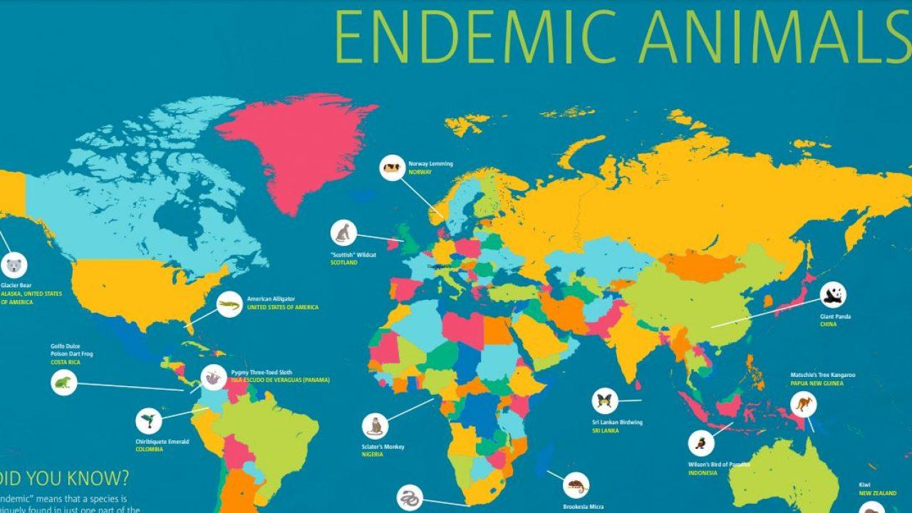 Endemic Animals Around The World Worldstrides