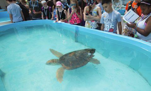 Turtle Hospital, Florida