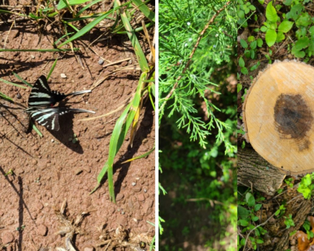 Left photo of butterfly on ground, right photo of trees