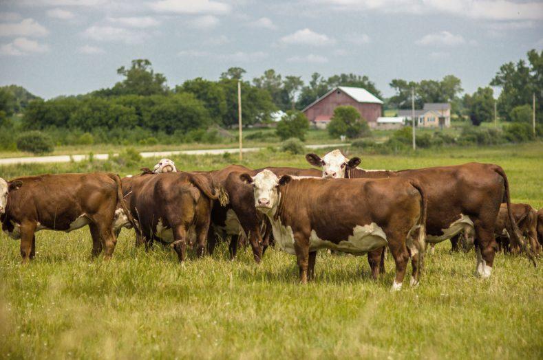 Midwest-Farm
